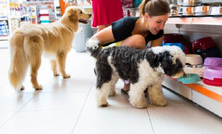 Pet Product Recalls- How to Make Sure You Are Ready - Petcare Industry